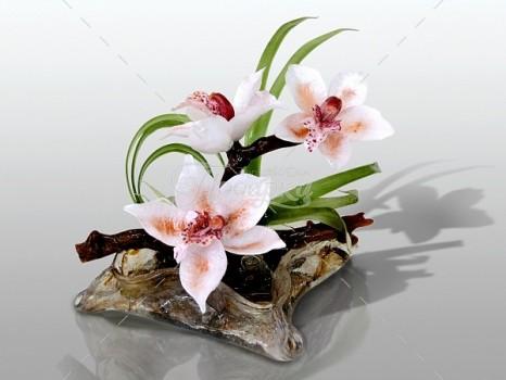Орхидеи Бриджит