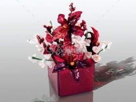 Орхидеи Виолет